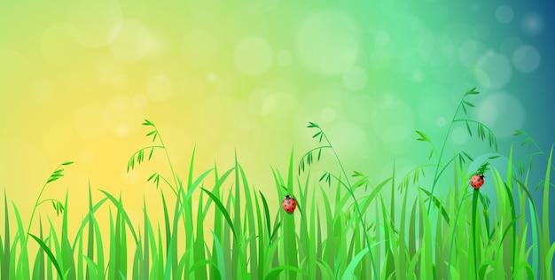 野原の花と草背景に雲と空