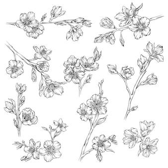 꽃과 식물 수집, 흑백 꽃 요소 손으로 그린 일러스트레이션