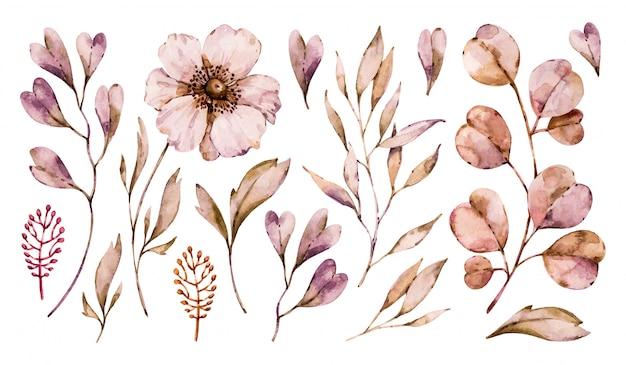 Цветет анемон и листья handpainted набор, изолированные на белом фоне. цветочная акварельная коллекция