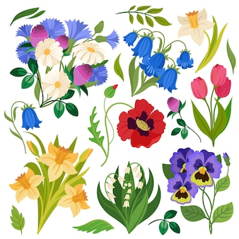 Flowers bouquet wildflowers meadow plants chamomile clover and daffodil poppy and lily set
