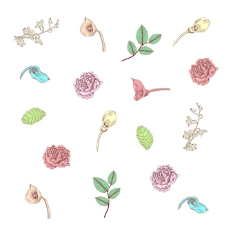 Flowers collection in hand drawn style