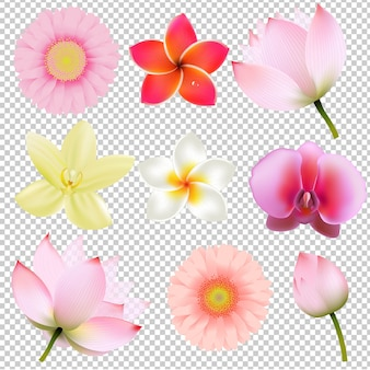 Flowers collection in transparent background gradient mesh,  illustration