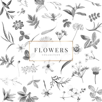 Flowers collection on a white background vector