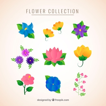 Flowers collection with different species