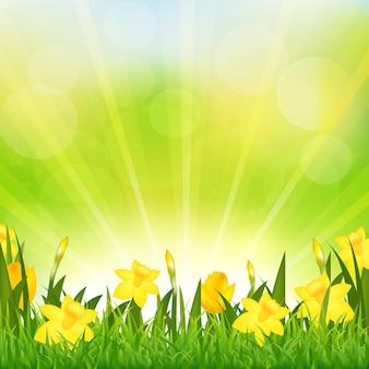 꽃 부활절 배경, 배경