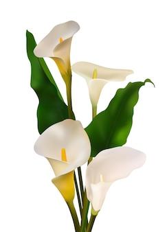 꽃들. 꽃 배경입니다. 칼라스. 백합. 하얀. 녹색 잎입니다. 완벽 한 패턴입니다. 흰 바탕.