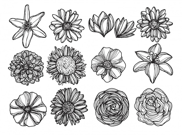 Flowers hand drawing and sketch black and white