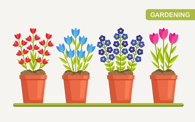 냄비에 꽃. 식물 화분에 꽃 식물. 자연 컨셉
