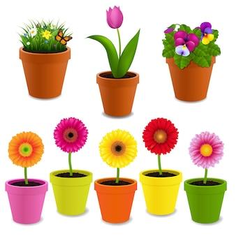 Коллекция цветов в горшках