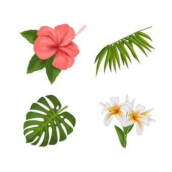 Collezione di fiori e foglie