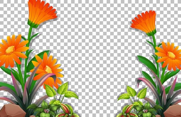Modello di cornice di fiori e foglie su sfondo trasparente