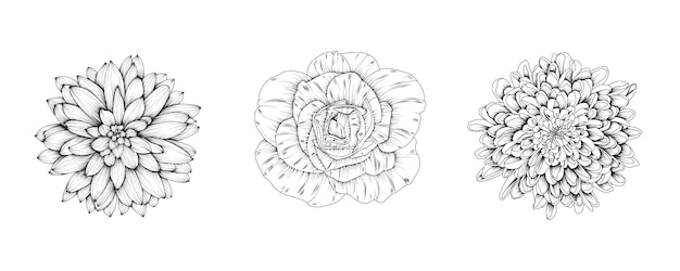 Flowers of rose, chrysanthemum, dahlia.