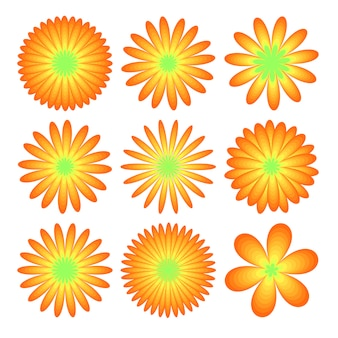 Flowers set: realistic asters, chrysanthemums, peonies isolated
