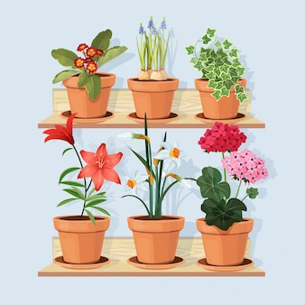 Flowers at shelves. decorative tree plants grow in pots and standing in home interior at wooden shelves cartoon pictures