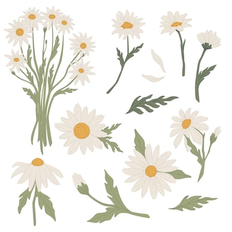 Flowers tied in bouquet, isolated icons of chamomile in blossom