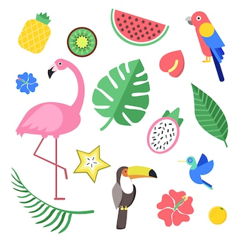 Flowers and tropical exotic fruits and birds