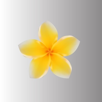 Цветы вектор премиум