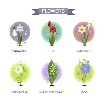 Flowers vector set isolated. illustration in flat style design. tulip, camomile, snowdrop, lily, narcissus, flax.