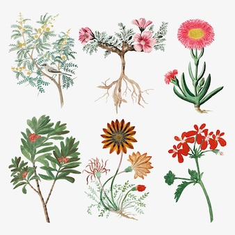 Flowers vector vintage nature illustration, remixed from the artworks by robert jacob gordon
