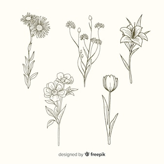 Flowers with stems hand drawn collection