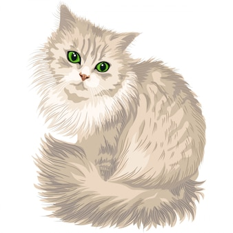 Fluffy cute cat with green eyes