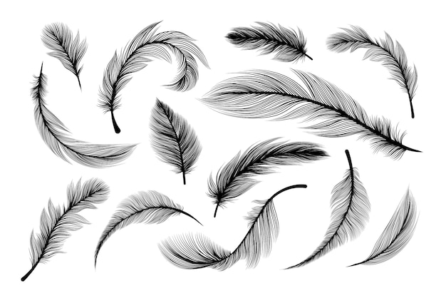 Fluffy feathers, flying plume quills silhouettes