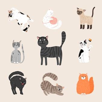 Пушистые забавные кошки.
