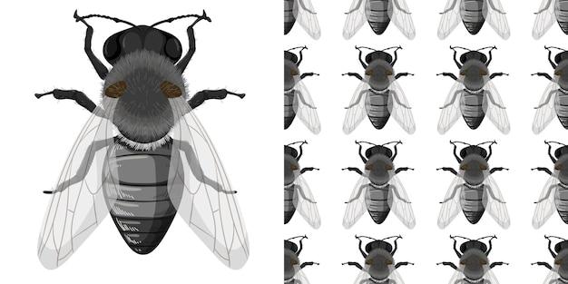 白い背景とシームレスに分離されたハエの昆虫