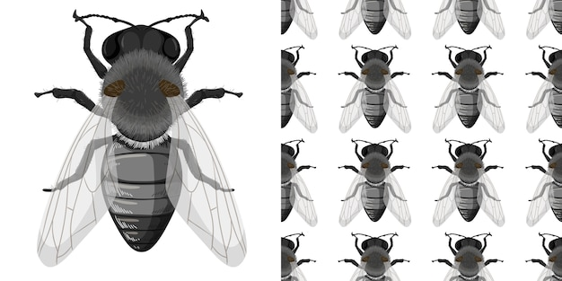 Fly insects isolated on white background and seamless