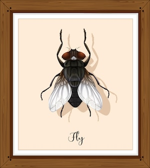 Fly on wooden frame