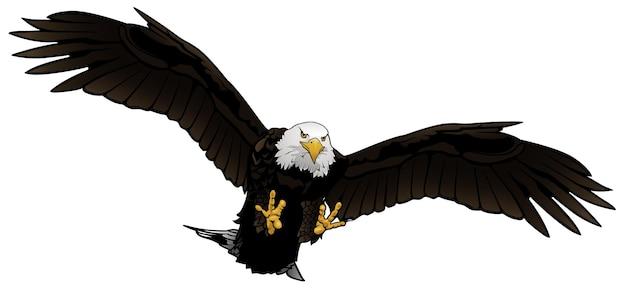 Flying bald eagle illustration isolated on white background