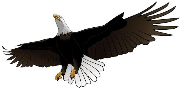 空飛ぶ白頭ワシのイラスト