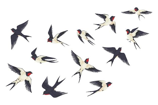 飛ぶ鳥が群がる。さまざまなポーズとの戦いで漫画の手描きのツバメ、白で隔離の子供のイラスト。ベクトルセットカラフルな画像自由ツバメグループ Premiumベクター