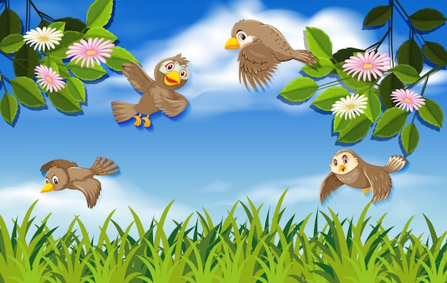 Flying birds in the nature