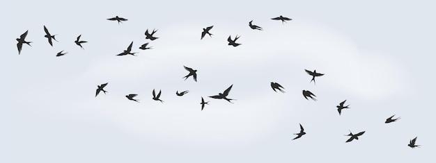 飛んでいる鳥のシルエット。装飾のための黒い海鳥、鳩、カモメまたはツバメの群れ、白い背景の上の孤立した黒。ベクトルの自由の概念