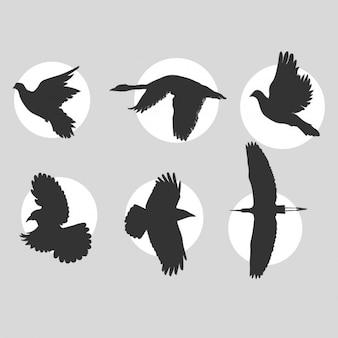 Uccelli in volo sagome di raccolta
