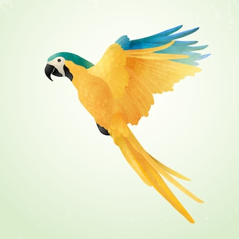 Flying blue and gold macaw isolated on light background. illustration of brazilian ara. watercolor on paper craft style.