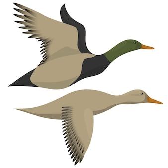 飛んでいるアヒルが白で隔離。ドレイクとアヒルの飛行アイコン。