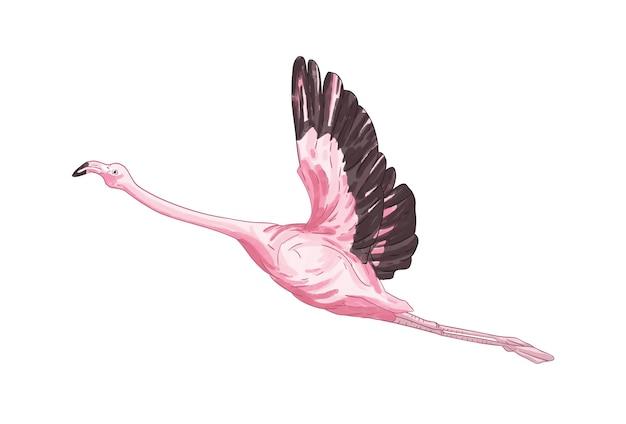 Иллюстрация летающего фламинго