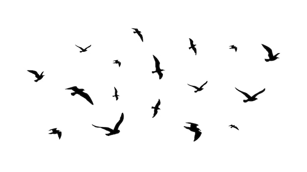 Flying flock of birds. flight bird silhouettes, isolated black doves or seagulls collection