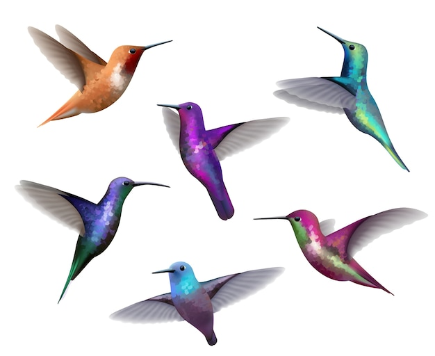 Flying hummingbirds. little colored birds exotic jungle colored little hummingbirds realistic tropical collection. hummingbird colorful beak, flying tropical illustration