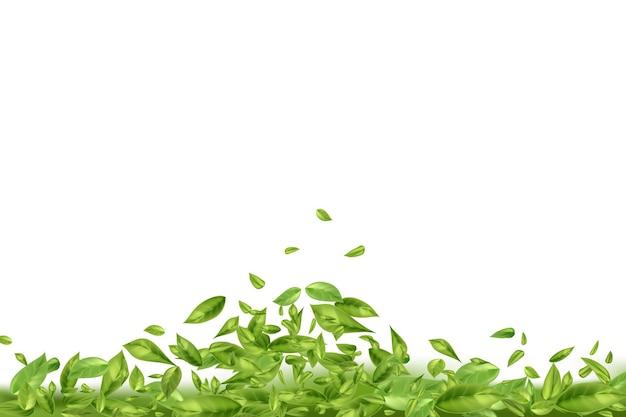 Летающие или падающие листья чая или мяты на белом фоне