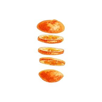 Flying pieces of fresh orange. vector vintage hatching color illustration.