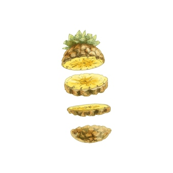 Flying pieces of fresh pineapple. vector vintage hatching color illustration.