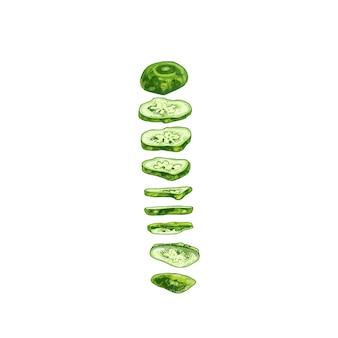 Летающие кусочки свежих зеленых огурцов. векторные винтажные штриховки цветные иллюстрации.