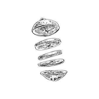 新鮮なレモンのフライングピース。ベクトルヴィンテージハッチング黒イラスト。白い背景で隔離。手描きデザイン