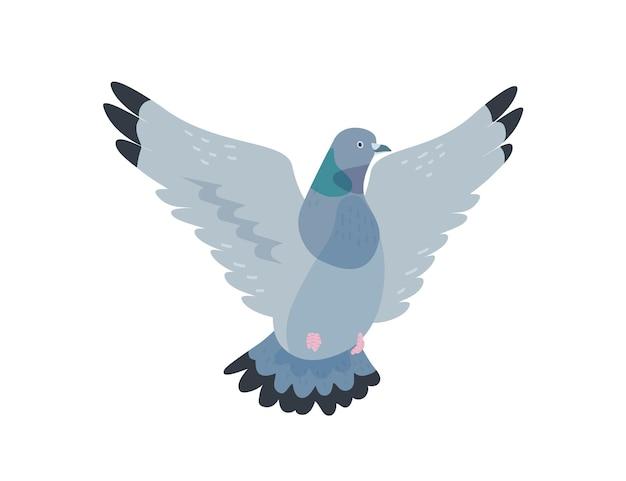空飛ぶ鳩フラットベクトルイラスト。羽を広げた灰色の鳩。都市の動物、野生生物、通りの鳥。自由と平和のシンボル。白い背景で隔離の飼いならされたバーディー。