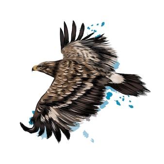 Летящий степной орел из всплеска акварели, цветной рисунок, реалистичный.