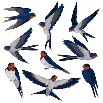Flying swallow birds in various views set, flock of birds  illustration on a white background
