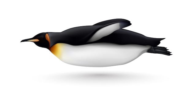 Flying or swimming beautiful king penguin closeup side view realistic isolated image against white